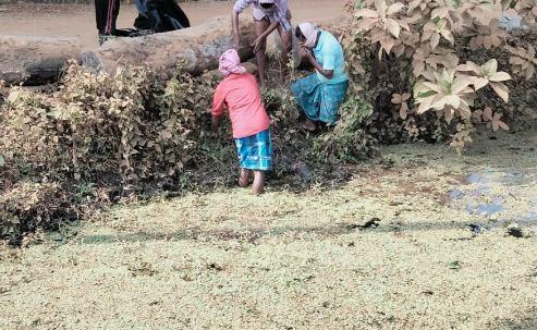 পুকুরে আগাছার মধ্যে থেকে উদ্ধার হল নিখোঁজ বৃদ্ধার ভাসমান মৃতদেহ, চাঞ্চল্য গোটা এলাকায়