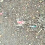 বিজেপি কর্মীর বাড়ি ভাঙচুর, রাতভর বোমাবাজি, অভিযোগের তীর তৃণমূলের দিকে