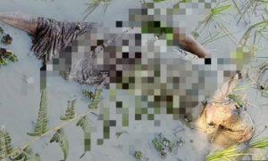 ধান ক্ষেত থেকে উদ্ধার এক ব্যক্তির মৃতদেহ, চাঞ্চল্যের সৃষ্টি সরীপুর এলাকায়
